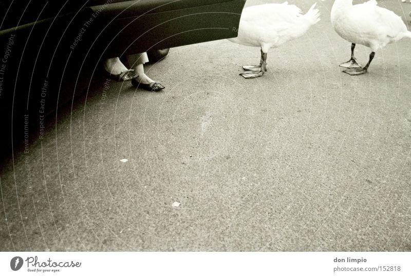 afraid to fly Straße PKW Vogel Tierfuß Schwarzweißfoto KFZ Autotür Asphalt Vertrauen analog Dame füttern Republik Irland