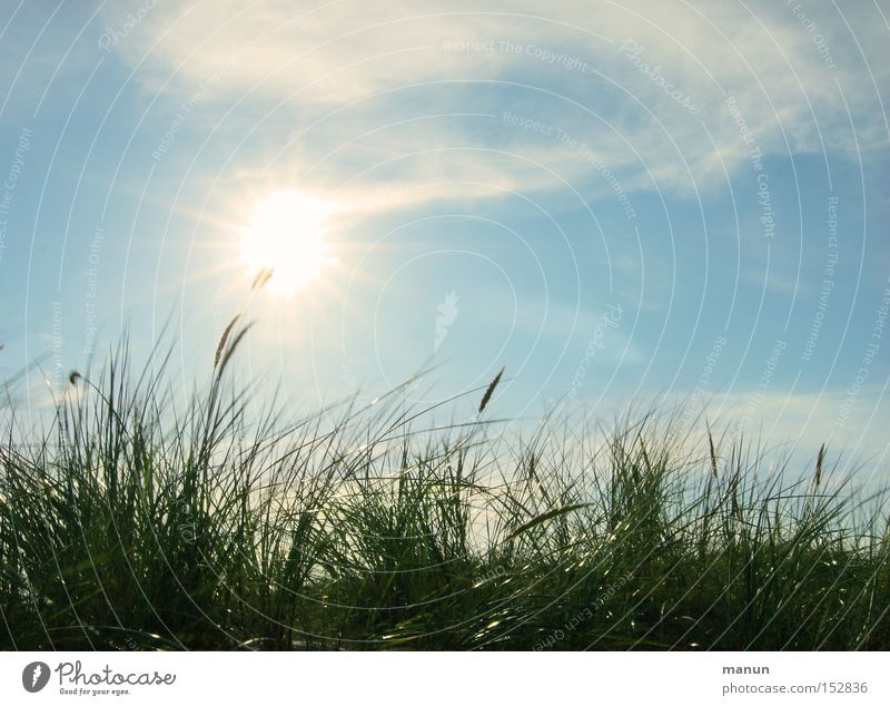 Summerbreeze Natur Himmel Sonne grün blau Sommer Ferien & Urlaub & Reisen ruhig Wolken Leben Erholung Herbst Gras Frühling Wärme Luft
