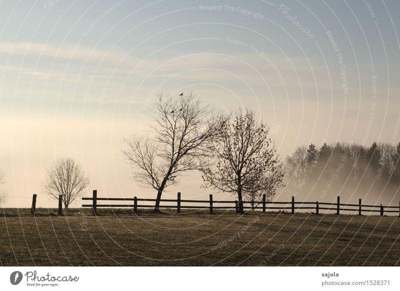 herbstnebel Umwelt Natur Landschaft Pflanze Himmel Herbst Wetter Nebel Baum Wiese stehen ästhetisch Zufriedenheit Stimmung herbstlich Herbstwetter Wolken Zaun