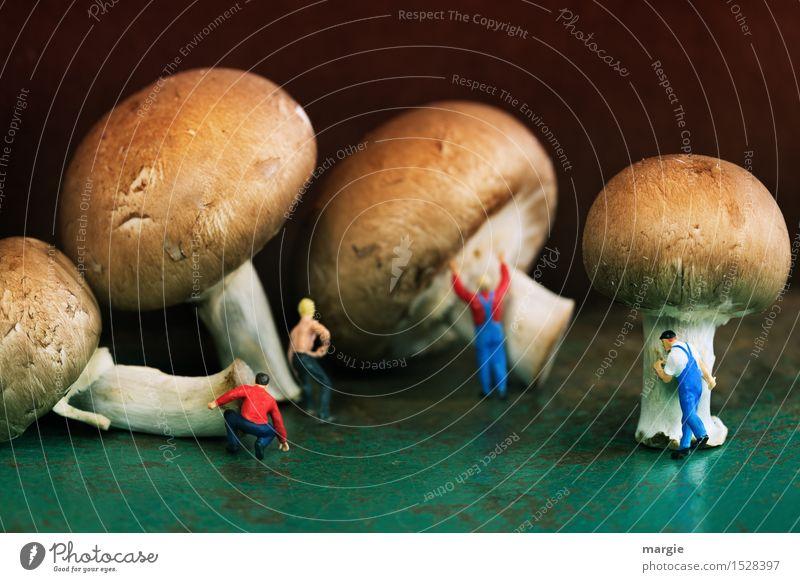Miniwelten - Pilzernte Mensch Mann grün Erwachsene Gesundheit Lebensmittel braun Arbeit & Erwerbstätigkeit maskulin Ernährung Kochen & Garen & Backen Küche