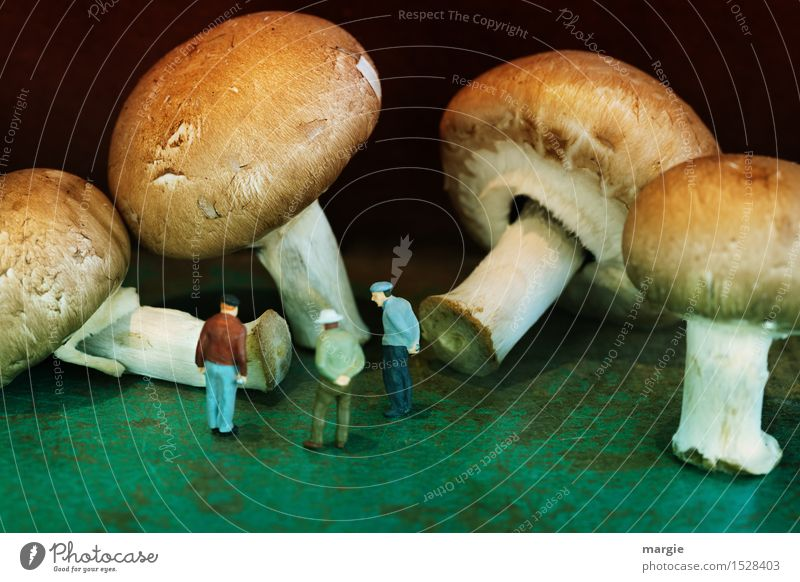Miniwelten - Pilzkunde Mensch Mann grün Gesunde Ernährung Wald Erwachsene Gesundheit Lebensmittel braun maskulin lernen Männlicher Senior Landwirtschaft Gemüse