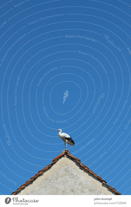 blitzableiter Dach Storch Dachgiebel Haus Dachfirst blau Vogel Himmel