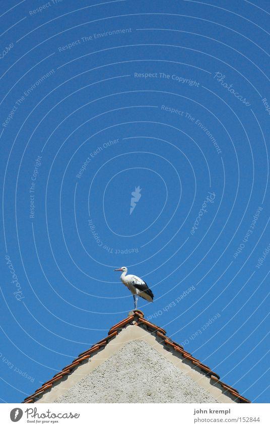 blitzableiter Himmel blau Haus Vogel Dach Storch Dachgiebel Dachfirst