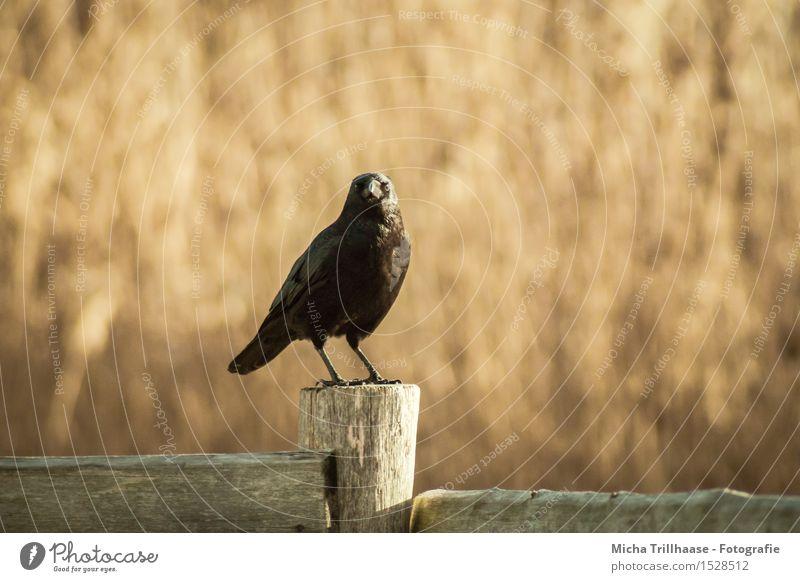 Blickkontakt Natur Tier schwarz Umwelt natürlich Holz fliegen Vogel orange Wetter Wildtier sitzen Flügel beobachten Schönes Wetter Pause