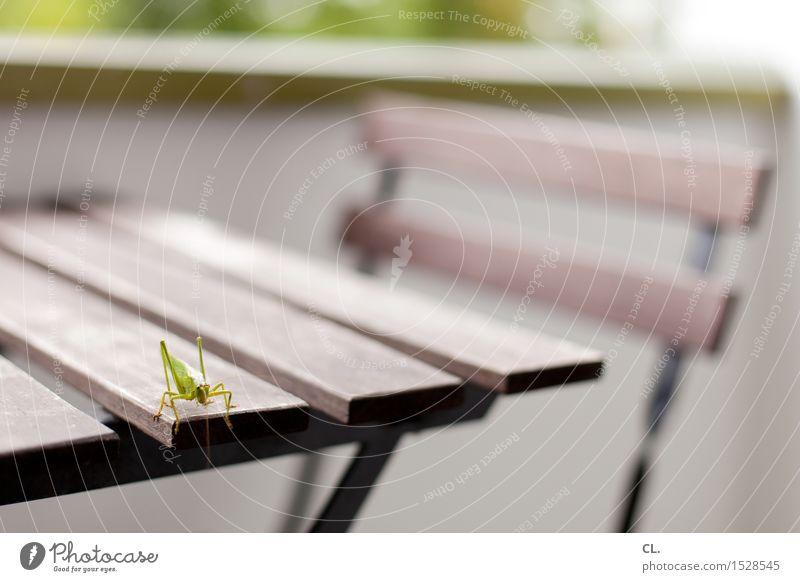 grashüpfer Häusliches Leben Möbel Stuhl Tisch Balkon Tier Heuschrecke Insekt 1 grün Farbfoto Außenaufnahme Menschenleer Textfreiraum rechts Textfreiraum oben