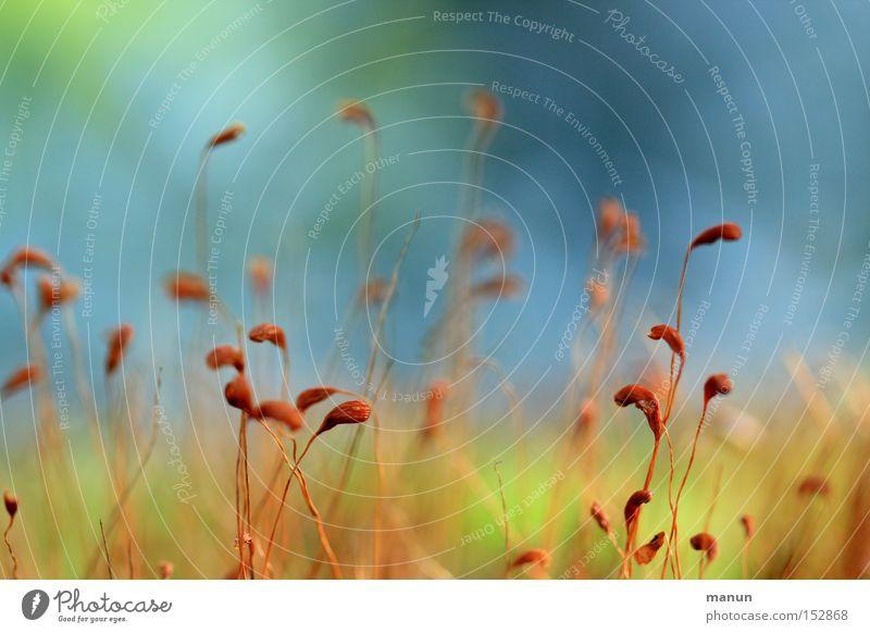 Bodendecker I Herbst herbstlich Schönes Wetter weich sprießen zart hell grün blau braun aufwärts Herbstfärbung Natur Kraft