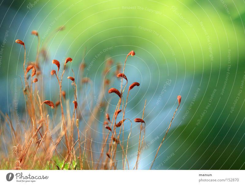 Bodendecker II Natur blau grün Herbst Frühling hell braun Schönes Wetter weich zart aufwärts herbstlich Herbstfärbung sprießen