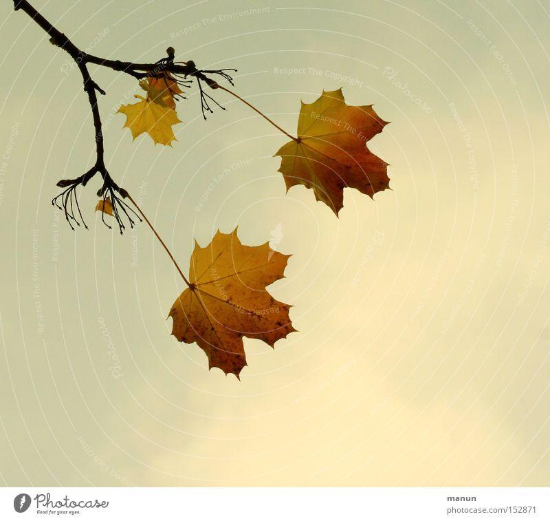 Lebensabend alt Farbe Blatt ruhig gelb Herbst 2 Ast Vergänglichkeit 3 Zweig herbstlich Symbole & Metaphern