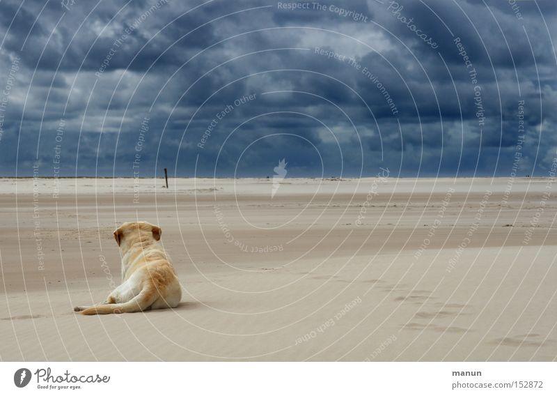 In der Ruhe liegt die Kraft Himmel Hund Natur blau Sommer Strand Wolken ruhig Ferne dunkel Landschaft Herbst Sand Küste hell Horizont