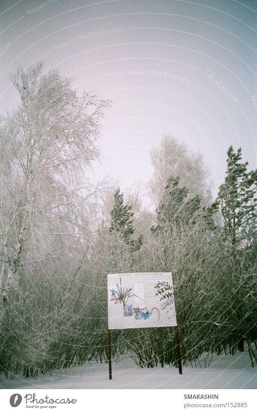 Baum Winter schwarz Wald kalt Schnee Eis Frost Sturm Russland Sibirien