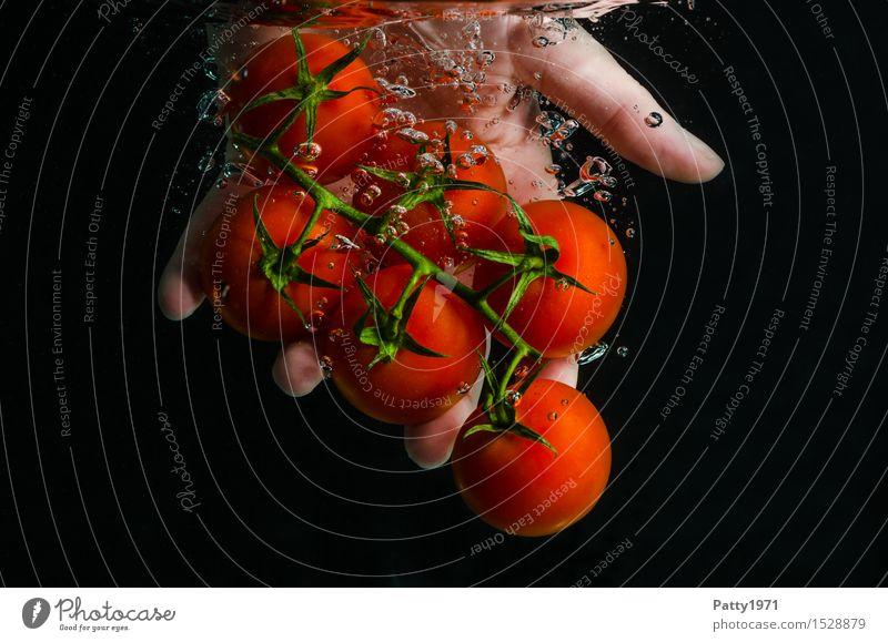 Tomaten Lebensmittel Gemüse Bioprodukte Vegetarische Ernährung Diät Trinkwasser Gesunde Ernährung Hand Finger frisch Gesundheit lecker nass natürlich grün rot