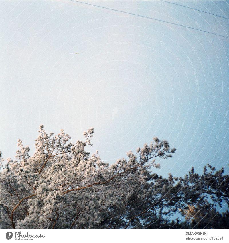 Baum schwarz kalt Schnee Eis Sturm Russland Sibirien Schneewehe Zeder