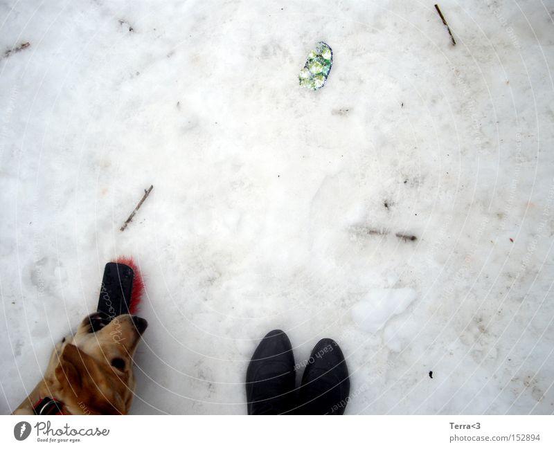 who let the dog out? Hund Winter Freude Schnee Spielen Schuhe dreckig Spielzeug Stiefel Haustier Säugetier Besen Labrador Welpe