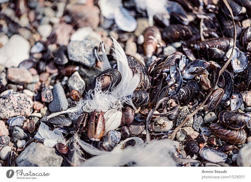 Federfund II ruhig Ferien & Urlaub & Reisen Strand Meer Insel Umwelt Natur Erde Sand Küste Ostsee Vogel Stein alt liegen natürlich trocken Stimmung Tod