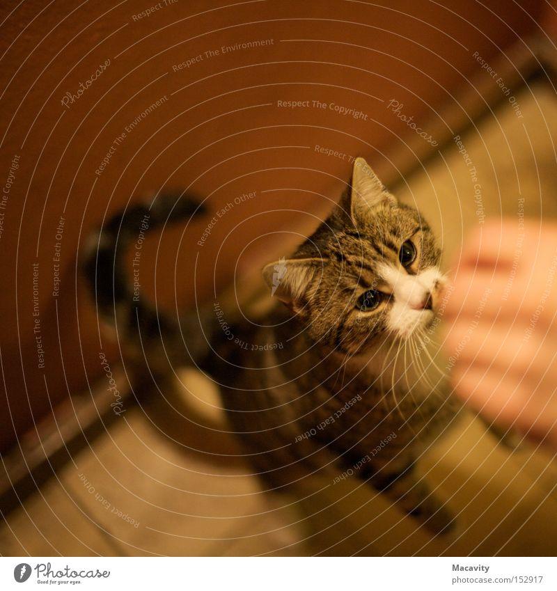 Her damit! Hand Tier springen Katze Zusammensein lernen stehen bedrohlich beobachten Neugier Konzentration Verbindung niedlich Appetit & Hunger Wachsamkeit Fressen