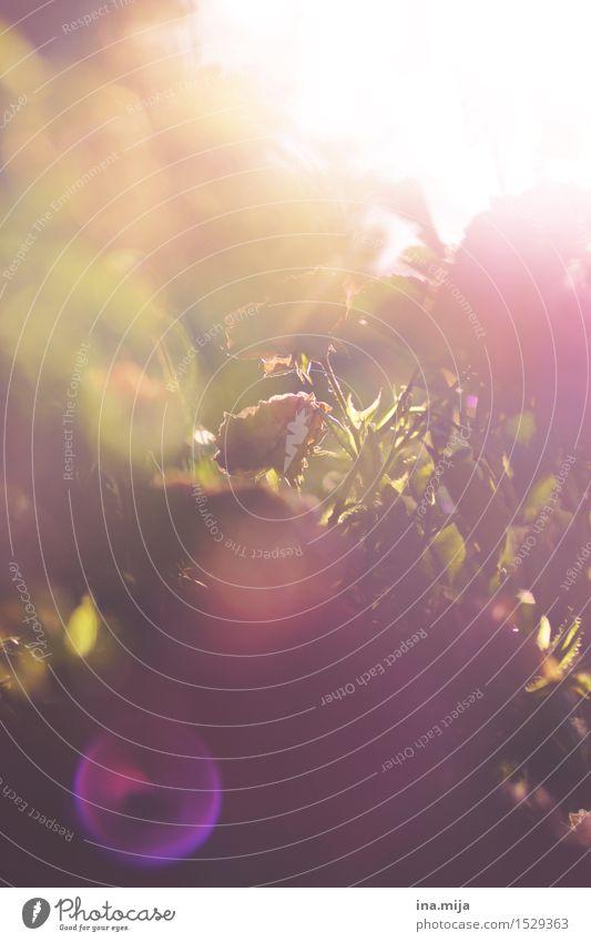 Momente des Glücks Natur Pflanze Sommer Blume Umwelt Wärme Blüte Frühling Religion & Glaube Glück Garten rosa Park glänzend frisch Kraft