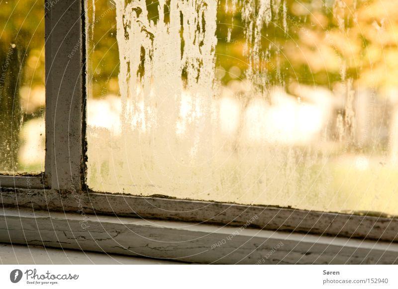 Trübe Aussicht alt Fenster Isolierung (Material) verfallen Handwerk Renovieren Rahmen gelehrt trüb Schimmelpilze Pilz Modernisierung Wärmeisolierung