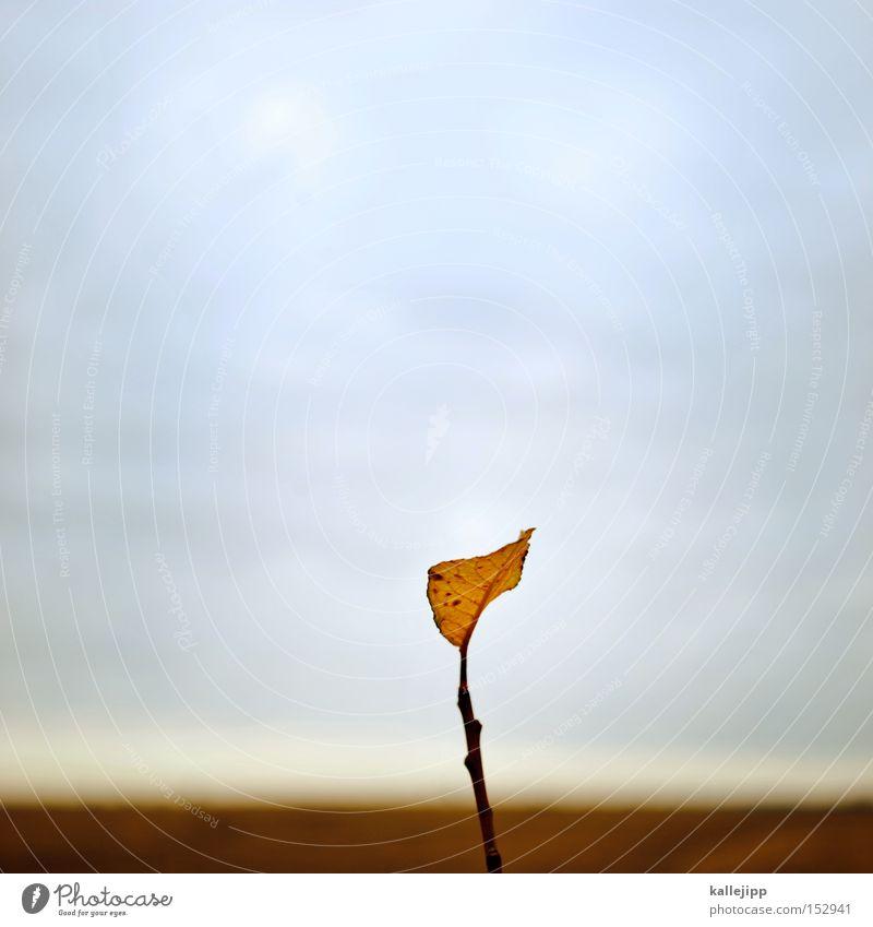 das letzte kalenderblatt Blatt Jahreszeiten Januar Winter Herbst Ast Natur Himmel kalt Einsamkeit