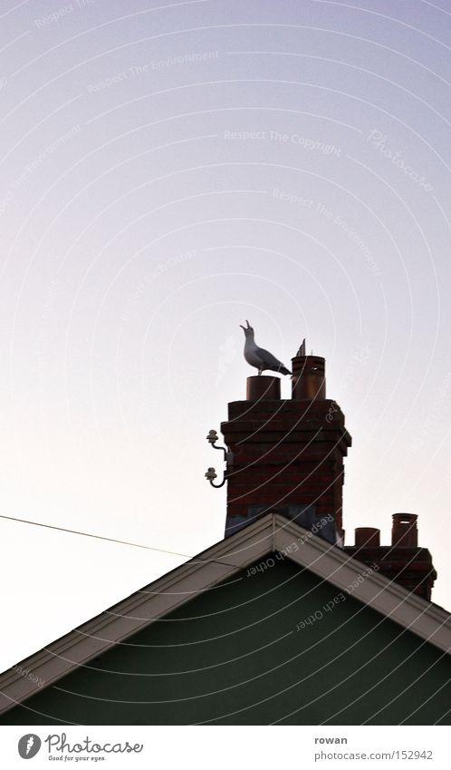 möwenruf Vogel Küste Dach schreien Schornstein Möwe Schnabel Krähe