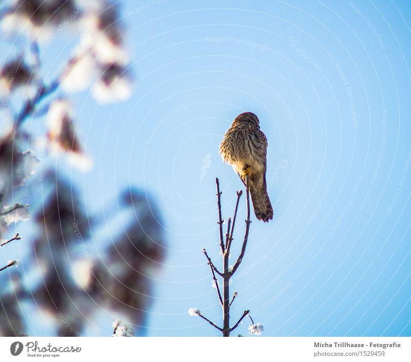 Ausblick Greifvogel Himmel Natur Pflanze blau Baum Erholung Tier Winter Umwelt gelb Schnee fliegen Vogel oben orange Wetter