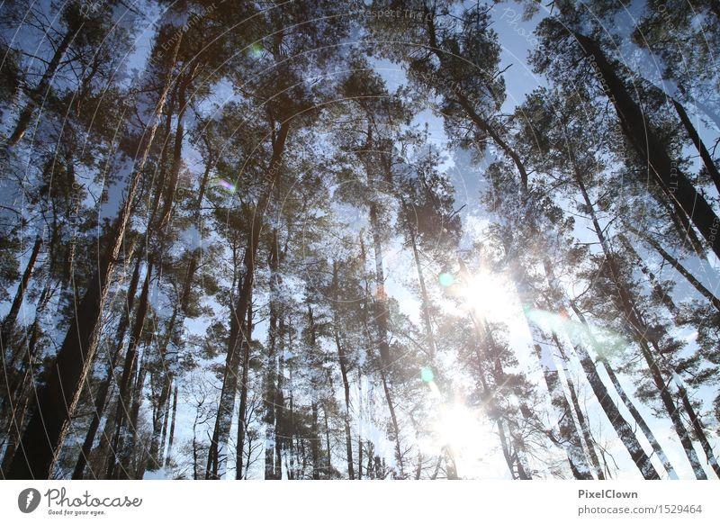 Waldlichtung Glück Wellness harmonisch Erholung Ferien & Urlaub & Reisen Tourismus wandern Landwirtschaft Forstwirtschaft Natur Landschaft Tier Pflanze Baum