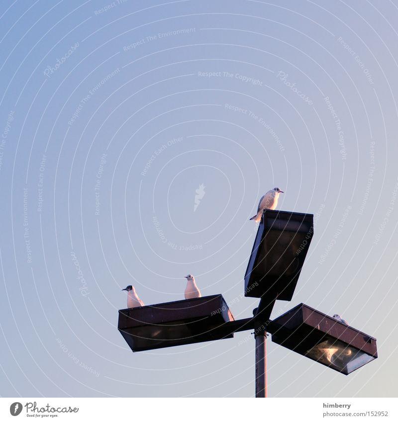 aufsichtsrat Vogel Tier Lampe Laterne Straßenbeleuchtung Aufsichtsrat Stadt Perspektive Gesellschaft (Soziologie) Verkehrswege möve Idee