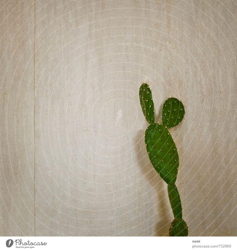Micky Mouse Wohnung Tapete Raum Pflanze Kaktus klein stachelig trocken grün Wand Stachel Raufasertapete Hintergrund neutral Farbfoto Gedeckte Farben