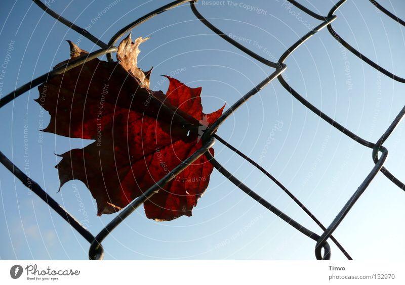 Herbst zeitlos Himmel Einsamkeit Herbst Traurigkeit Trauer Spaziergang Zaun Gedanke Herbstlaub Maschendraht hängenbleiben festhängen