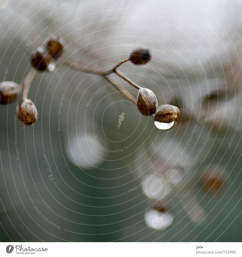 somewhere Natur Pflanze Winter Wiese Park Regen Wassertropfen trist Tropfen Blühend verblüht