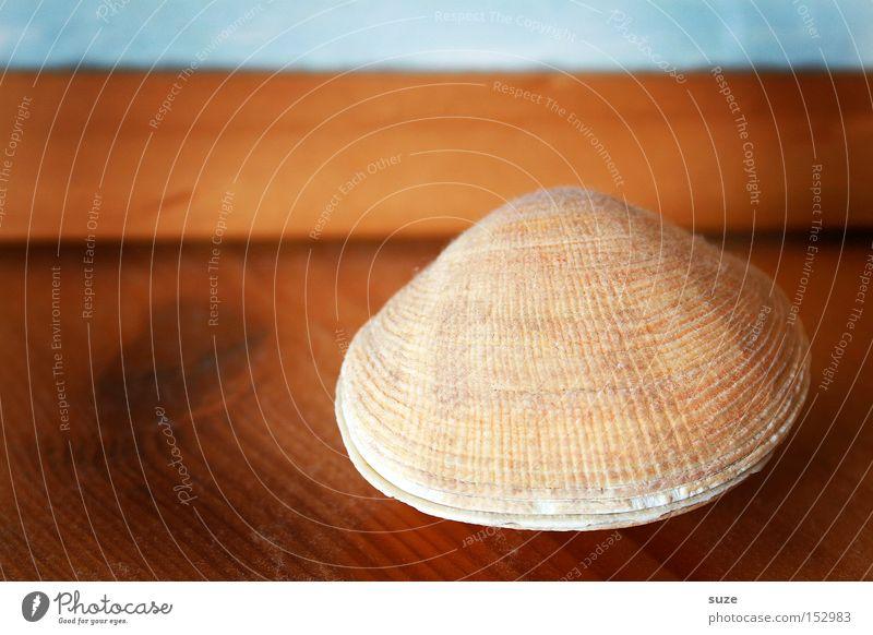 Kalkschale schön ruhig Holz braun liegen Dekoration & Verzierung geschlossen einfach einzigartig Kitsch trocken Holzbrett Erinnerung Muschel Souvenir