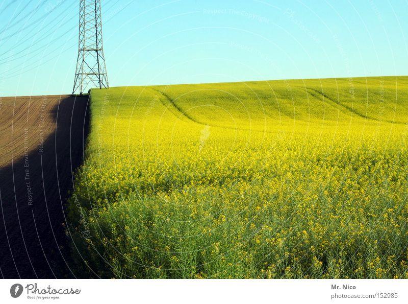 energiefeld Kraft Raps Rapsfeld Feld Ernte Landwirtschaft Natur gelb grün Grenze Rohstoffe & Kraftstoffe Umwelt Elektrizität Energiewirtschaft Wärme Deutschland
