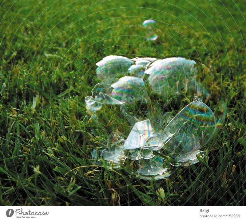 gute Vorsätze fürs neue Jahr... Seifenblase Luft durchsichtig schimmern filigran Wiese Gras liegen Sommer platzen Freude Spielen grün Rasen Vergänglichkeit