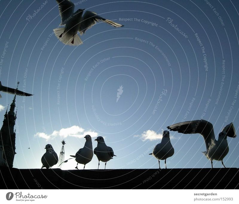 auf die plääätze . . . . fertig . . . . LOOOOOOOSSS!!! Möwe Schönes Wetter Mauer Silhouette Sonne flattern kalt Winter unten blau schwarz Gegenlicht Vogel