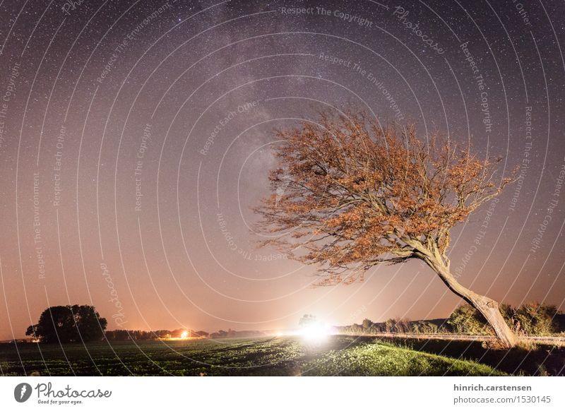 Milchstraße Umwelt Natur Landschaft Erde Himmel Wolkenloser Himmel Nachthimmel Stern Freude Milchstrasse Baum Sternenbild Farbfoto Außenaufnahme