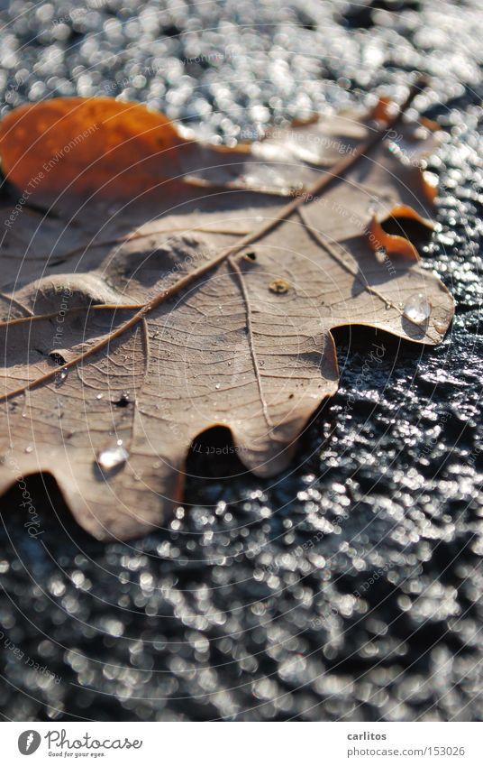 Einigkeit und Recht auf Freizeit Winter Blatt kalt Herbst Freiheit Gesetze und Verordnungen Eiskristall Eiche ausrutschen Wiedervereinigung Rutschgefahr