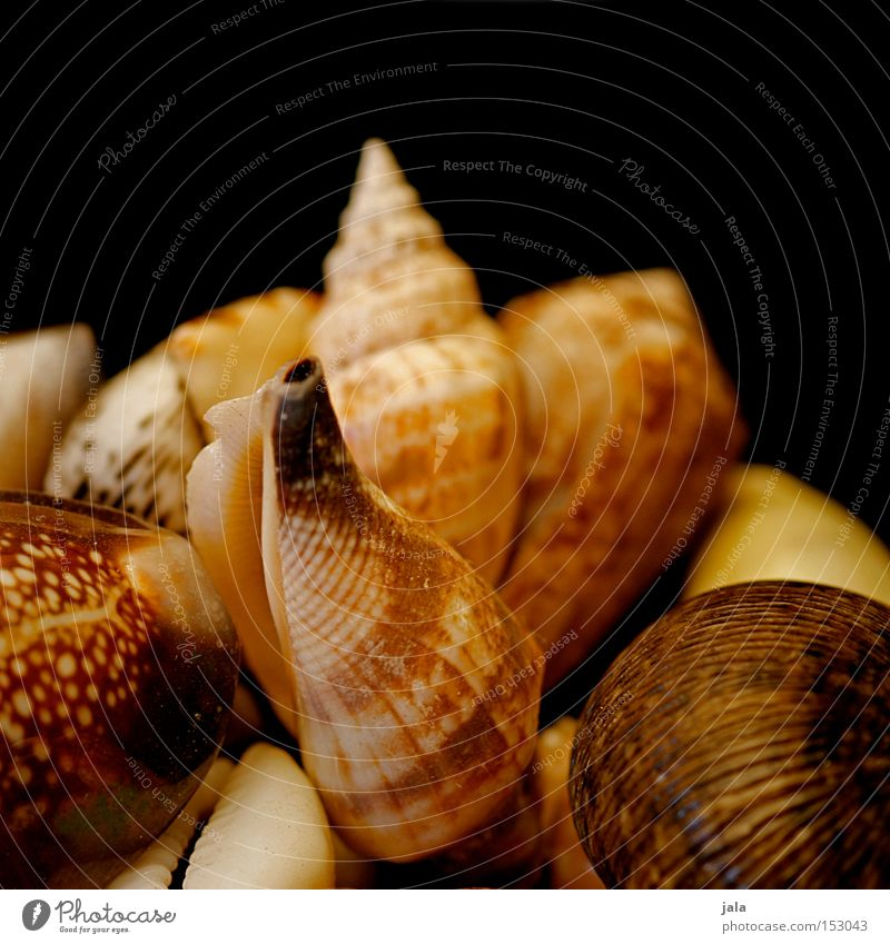 strandfunde Natur Wasser Meer Sommer Strand Ferien & Urlaub & Reisen Sand Küste Dekoration & Verzierung Sammlung Muschel Fernweh Erinnerung Meerestier Fundstück Schecke
