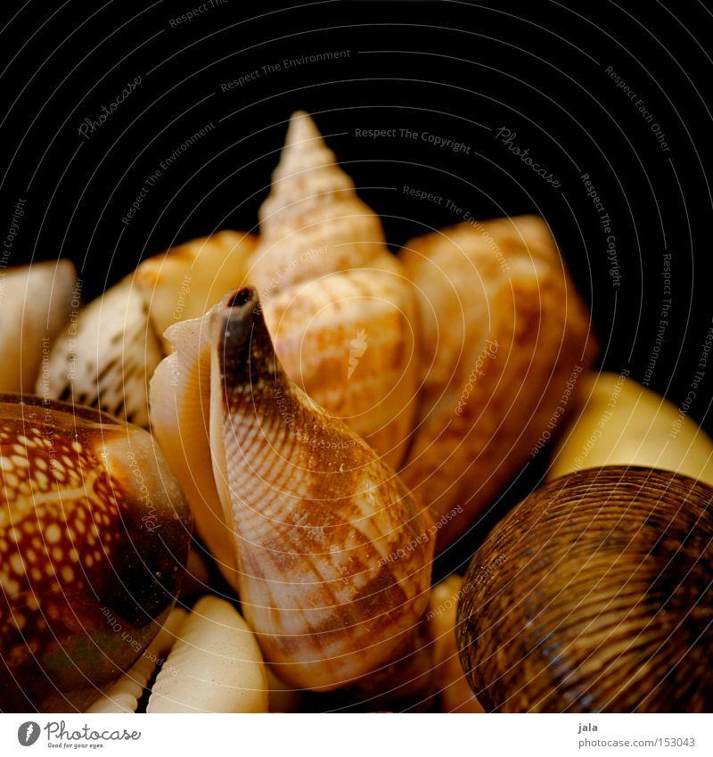 strandfunde Natur Wasser Meer Sommer Strand Ferien & Urlaub & Reisen Sand Küste Dekoration & Verzierung Sammlung Muschel Fernweh Erinnerung Meerestier Fundstück