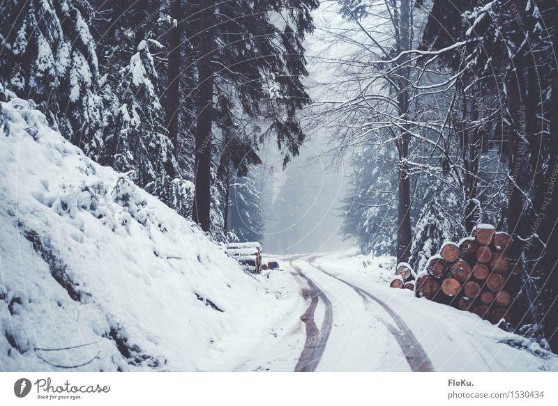 Winternebel Umwelt Natur Wetter schlechtes Wetter Eis Frost Schnee Baum Wald kalt nass natürlich grau weiß Stimmung Schwarzwald Straße Wege & Pfade Reifenspuren