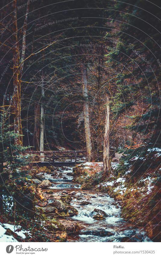 Schwarzwald Bächlein Winter wandern Umwelt Natur Landschaft Urelemente Erde Wasser schlechtes Wetter Eis Frost Schnee Pflanze Baum Wald Berge u. Gebirge