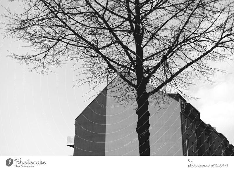 baum und haus Umwelt Natur Landschaft Wolkenloser Himmel Herbst Winter Schönes Wetter Baum Stadt Haus Einfamilienhaus Gebäude Architektur Mauer Wand