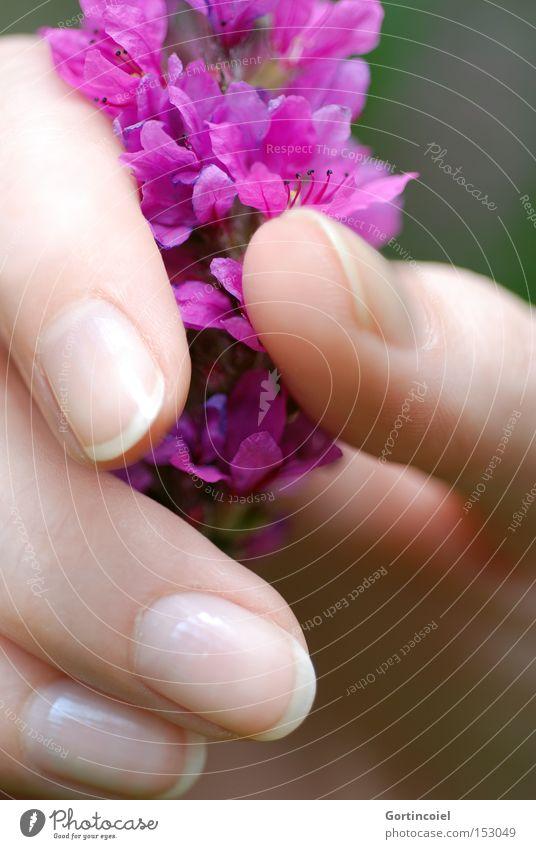 Spürbar Hand schön Pflanze Sommer Blume feminin Blüte Stil Frühling elegant Haut Finger Wellness festhalten zart violett
