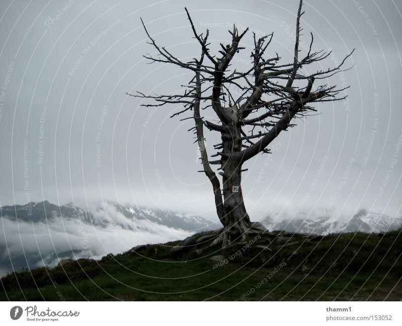 Einsamkeit Himmel Baum Berge u. Gebirge Landschaft Trauer Verfall Verzweiflung kahl