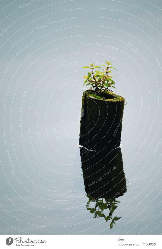 Spiegelung (Die Arche) Natur Wasser Pflanze ruhig Leben Erholung Garten Holz See Park Zufriedenheit Kraft Kraft Spiegel Reflexion & Spiegelung Überraschung