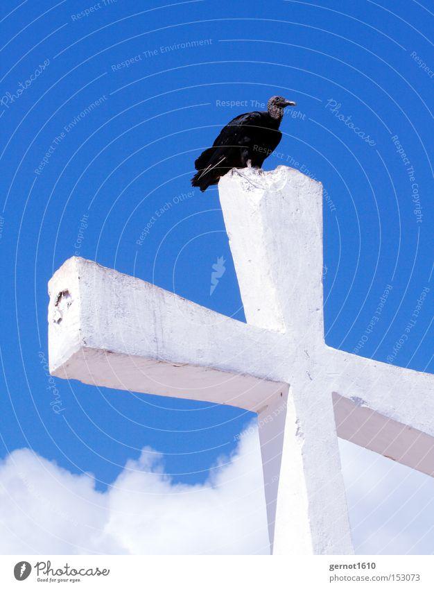Golgatha 1 Himmel weiß blau schwarz Religion & Glaube Vogel fliegen Beton Luftverkehr Feder Vergänglichkeit Christliches Kreuz Denkmal Symbole & Metaphern Wahrzeichen überblicken