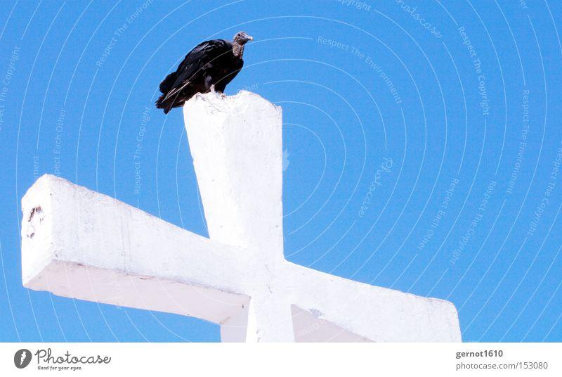 Golgatha 2 Himmel weiß blau schwarz Religion & Glaube Vogel fliegen Beton Luftverkehr Feder Christentum Christliches Kreuz Denkmal Symbole & Metaphern