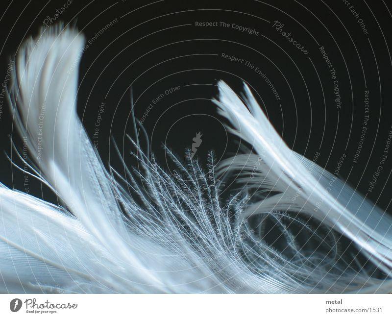 Federn - Variation #1 weiß schwarz Hintergrundbild Vogel Makroaufnahme