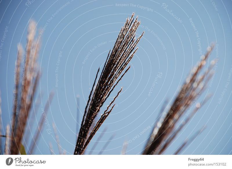 Wedel Himmel blau Sommer Wiese Gras Wind zart wiegen