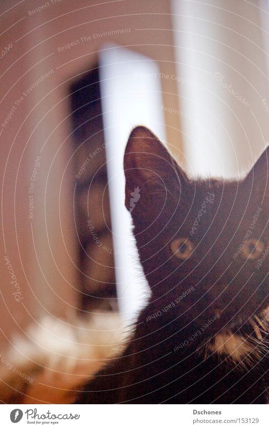 TOKIO. Katze Hauskatze verkatert Haustier Tier Sonne schwarz Desaster Volksglaube Säugetier kitty
