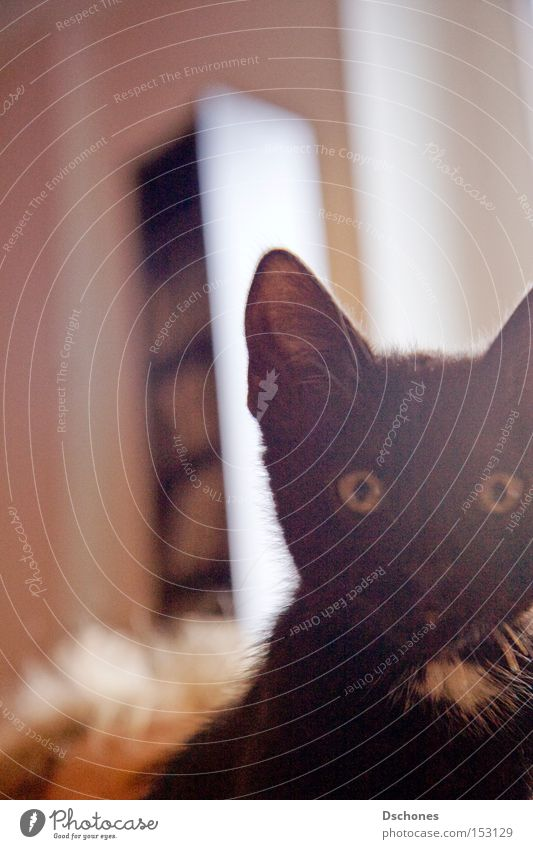 TOKIO. Katze Sonne Tier schwarz Haustier Säugetier Hauskatze Desaster verkatert Volksglaube