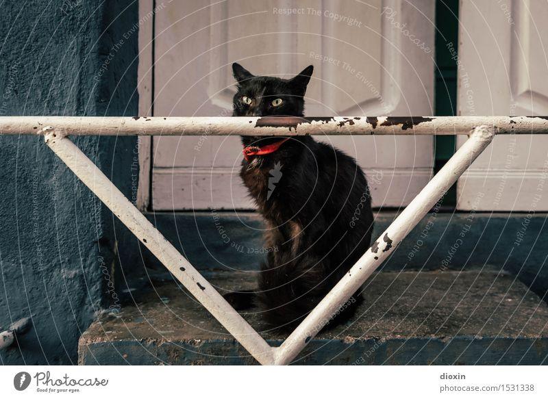 Chat Noir Stadt Santiago de Cuba Kuba Mittelamerika Südamerika Karibik Tür Treppengeländer Tier Haustier Katze 1 sitzen kuschlig schwarz Farbfoto Außenaufnahme